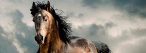 ▷ Sonhar Com Cavalo 【É Sorte?】