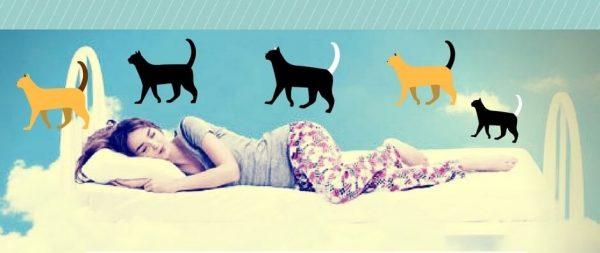▷ Sonhar com Gato【IMPERDÍVEL】