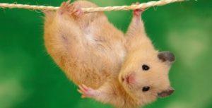 ▷ Sonhar com Rato 【Interpretações Reveladoras】