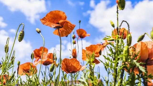 flores lindas no jardim