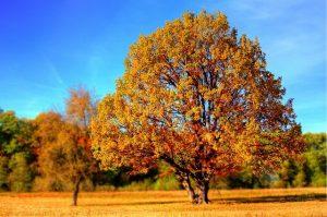 ▷ O Que Significa Sonhar Com Árvore?
