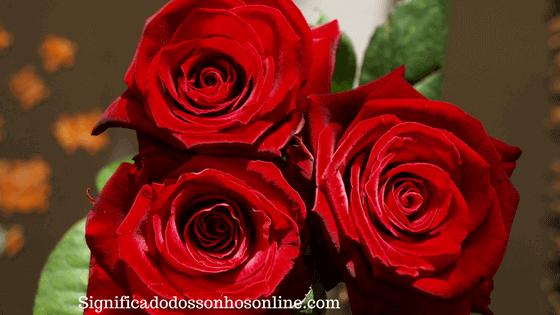 ▷ Sonhar Com Rosas Vermelhas é Mau Presságio?