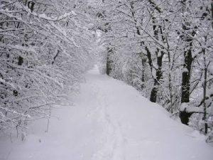 ▷ Sonhar com Neve【Significados Reveladores】