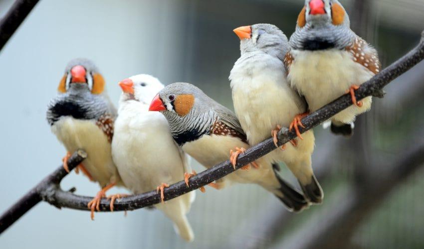 muitos passarinhos em cima de um galho observando a natureza