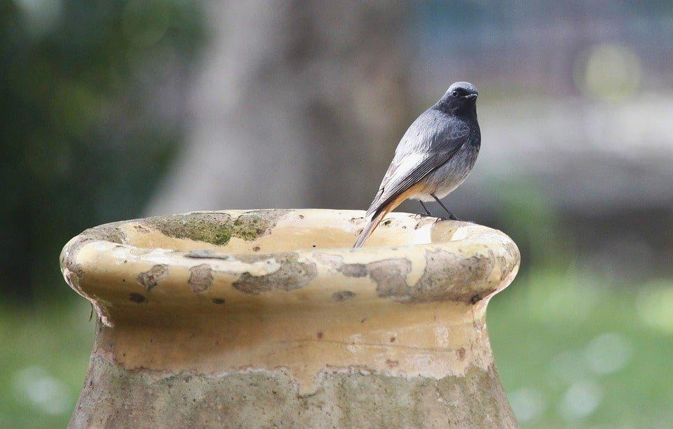 passarinho em cima de um vaso de cimento pronto para voar