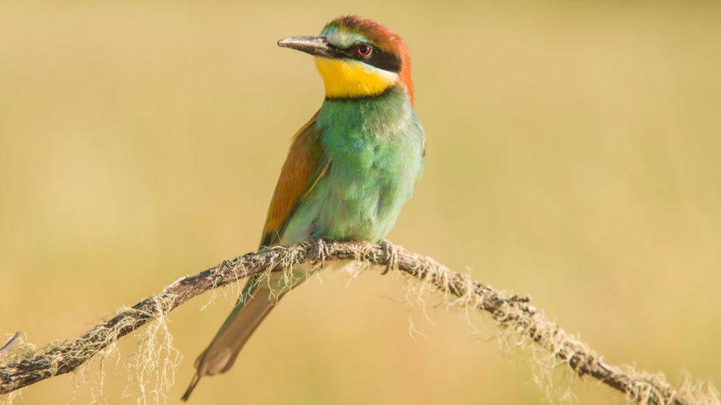 passarinho colorido em um galho de árvore no meio da roça