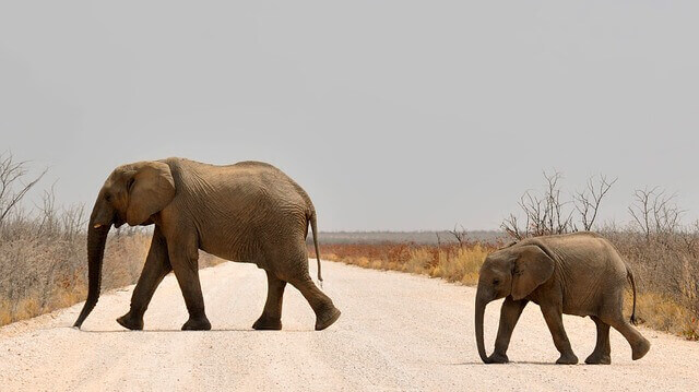 filhote de elefante