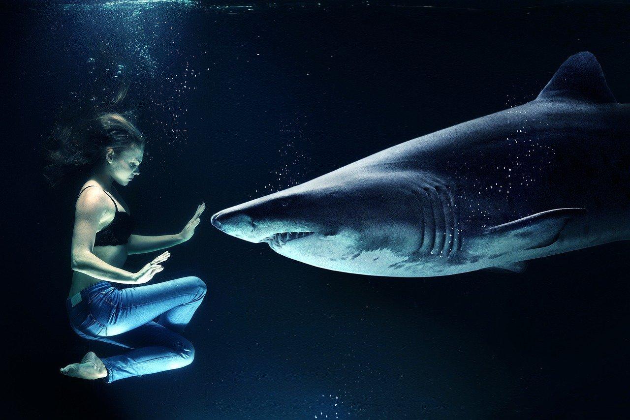 You are currently viewing ▷ Sonhar Com Tubarão 【Interpretações Reveladoras】