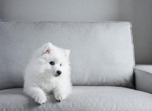 ▷ Sonhar Com Cachorro Branco – Significados Reveladores