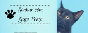 ▷ Sonhar com Gato Preto 【Interpretações Reveladoras】