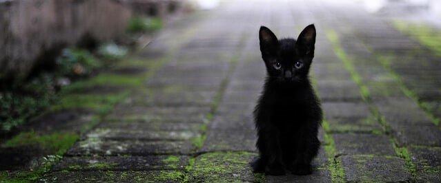 filhotinho de gato preto