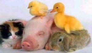 ▷ Sonhar com animais【Interpretações Reveladoras】