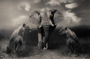▷ Sonhar Com animais – Significados Reveladores
