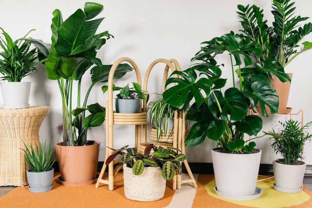 coleção de folhagens de plantas em casa