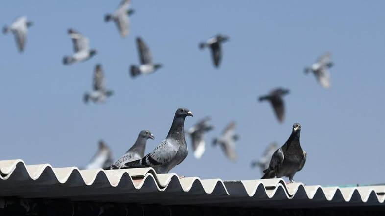 vários pombos voando em cima do telhado