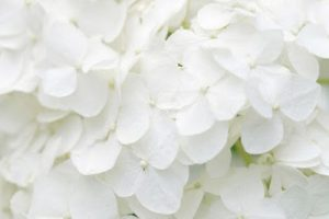 ▷ Sonhar com Branco – 【Significados Ocultos】