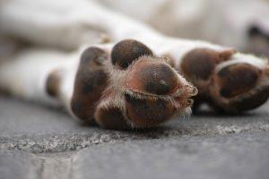 ▷ Sonhar Com Animais Mortos é Mau Presságio?