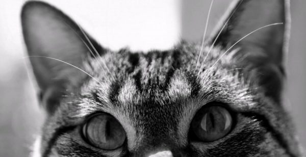 gato observando espiritos