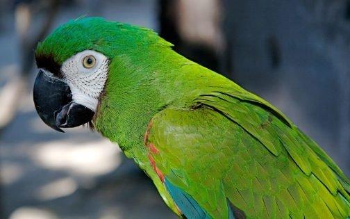 ▷ Sonhar Com Papagaio Verde【É Sorte?】