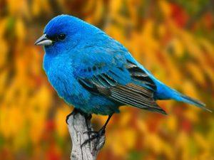 ▷ Sonhar Com Pássaro Azul 【Interpretações Reveladoras】