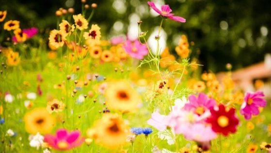 sonhar com flores no jardim
