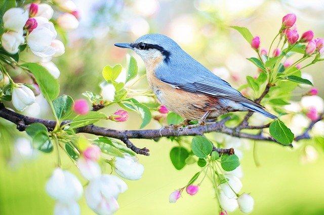 pássaro azul claro em cima de um galho na natureza