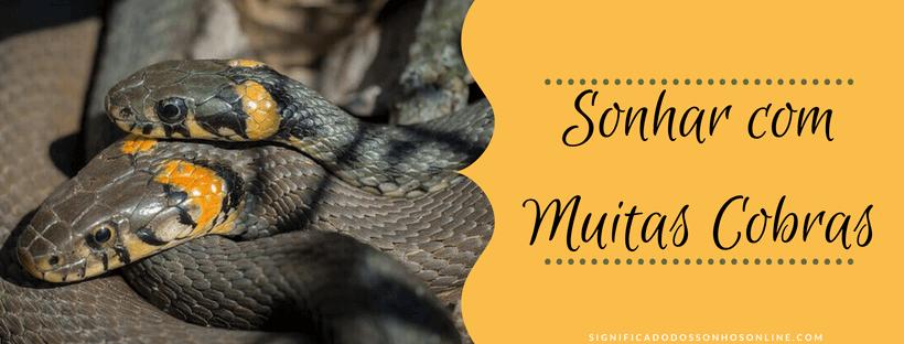 You are currently viewing ▷ Sonhar Com Muitas Cobras 【Tudo o que você precisa saber】