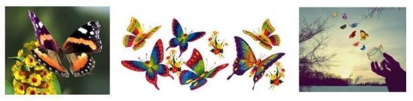 várias mariposas voando