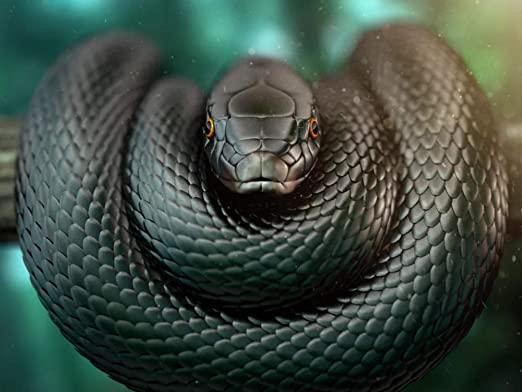 cobra preta enrolada em um galho na natureza