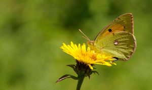 ▷ Sonhar com Mariposa【Significados Impressionantes】