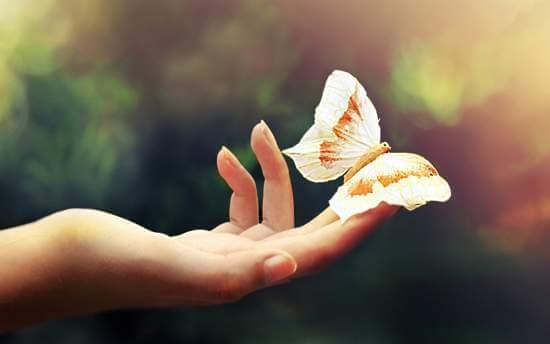 mariposa pousando no meu dedo