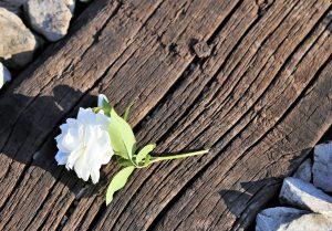 Frases de Humildade Que Engrandecem a Alma
