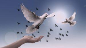As 30 Melhores Mensagens de Paz