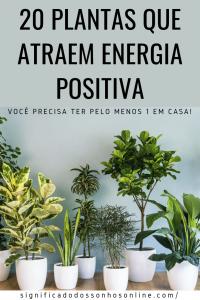 20 Plantas Que Atraem Energia Positiva – Você Precisa Ter Pelo Menos 1 Em Casa!