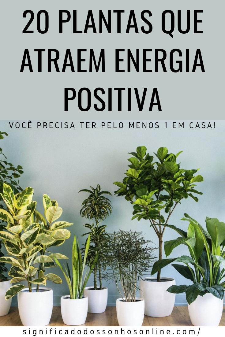 You are currently viewing 20 Plantas Que Atraem Energia Positiva – Você Precisa Ter Pelo Menos 1 Em Casa!