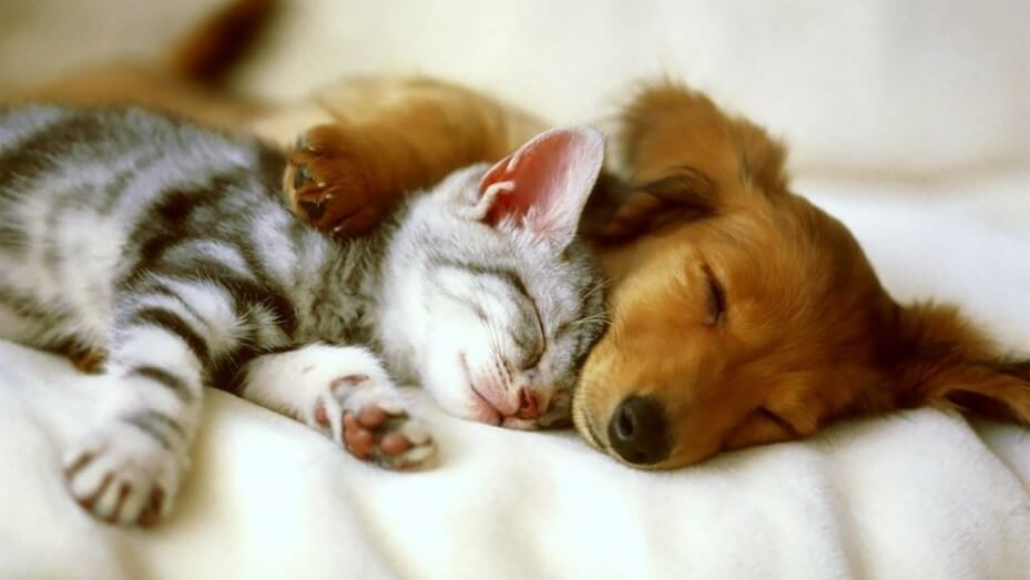 Você Sabe Qual é a Missão Dos Cães e Gatos Na Evolução Das Nossas Vidas? Descubra!