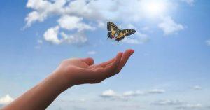 Borboletas São Mensageiras Espirituais Que Tentam Te Dizer Algo – Aprenda a Interpretar Essas Mensagens!
