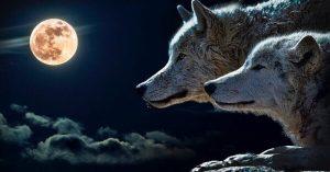 Leia Essa Parábola Dos Lobos Que Ajudará Você a Refletir Sobre Sua Vida