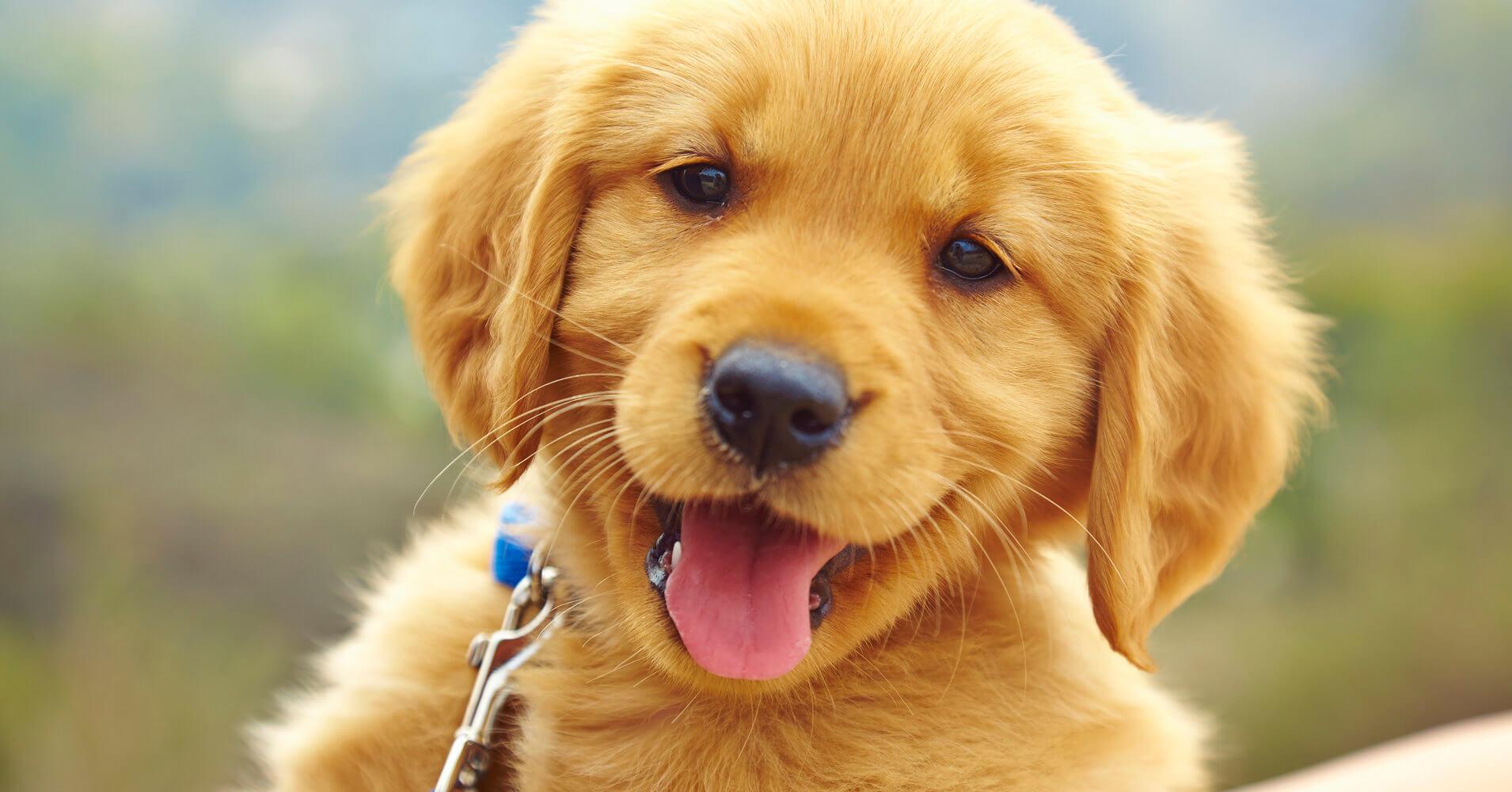 """""""Meu Cachorro Não É Meu Filho"""", Essa Bela Reflexão Vai Te Deixar Sem Palavras!"""