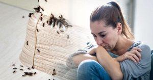 Insetos e espiritualidade: Veja o que significa no nível de energia ter uma praga em casa