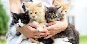 ▷ Sonhar Com Ninhada De Gatos é Bom Presságio?