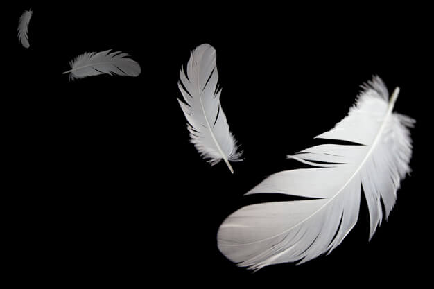 5 Significados Espirituais De Ver Penas No Nosso Caminho