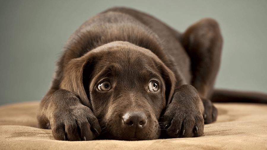▷ Sonhar Com Cachorro 【Qual seu número da sorte?】