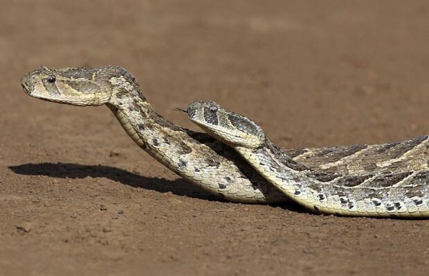 ▷ Sonhar Com Duas Cobras【15 Significados Reveladores】