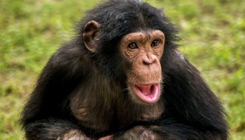 ▷ Sonhar Com Macaco é Sorte No Jogo Do Bicho?