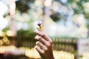 6 Métodos Caseiros Para Eliminar Energias Negativas De Casa