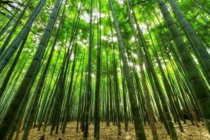 ▷ Sonhar Com Bambu 【Significados Impressionantes】