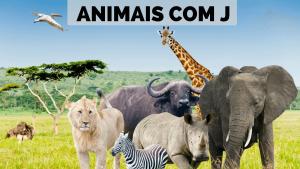 ▷ Animais Com J 【Lista Completa】