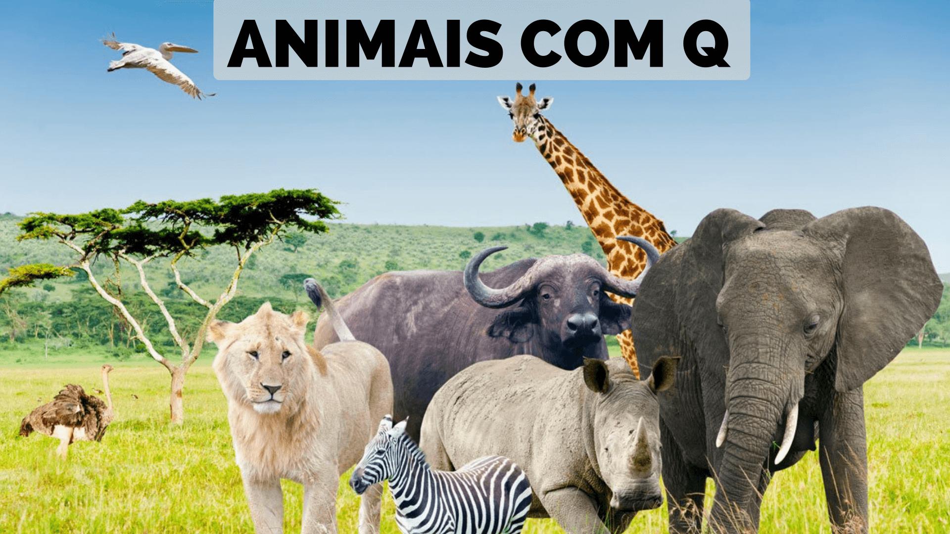 ▷ Animais Com Q 【Lista Completa】