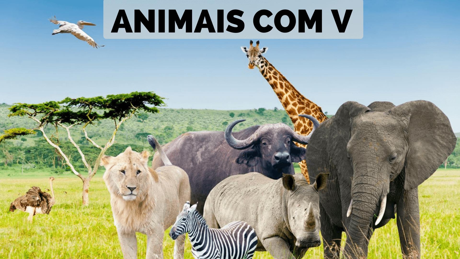 ▷ Animais Com V 【Lista Completa】